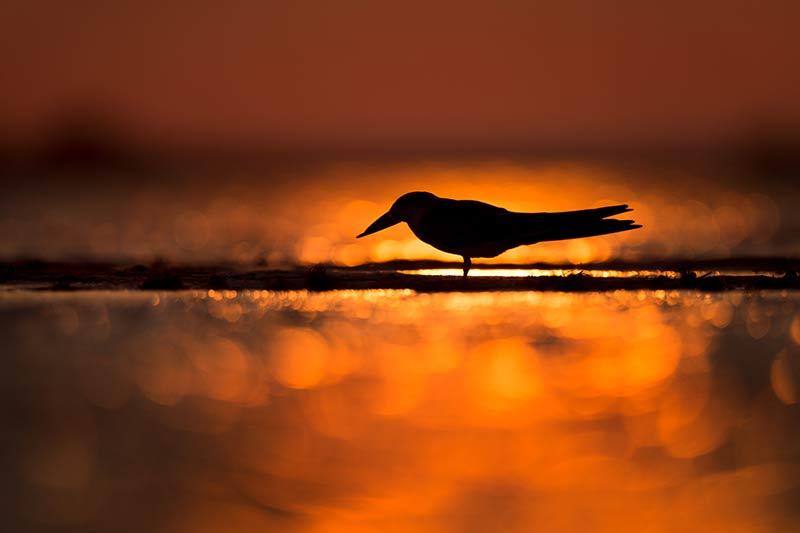 Een mooie silhouetfoto van een vogel met bokeh bollen